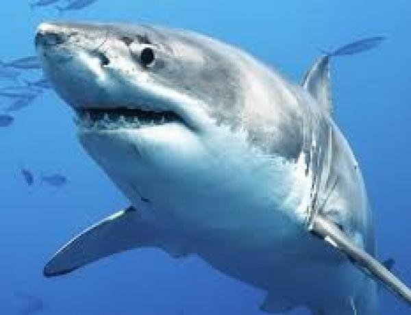 Avoid the sales sharks